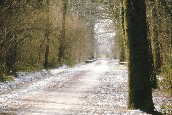 A travers le bois