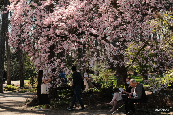 Sous les Magnolias