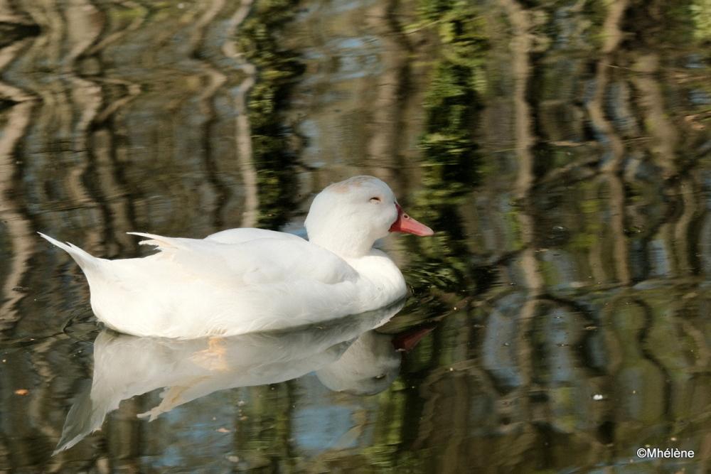 Au bord de l'étang -2