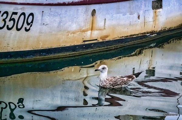Une visite au port