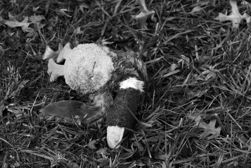 Stuffed duck, dead in the grass.