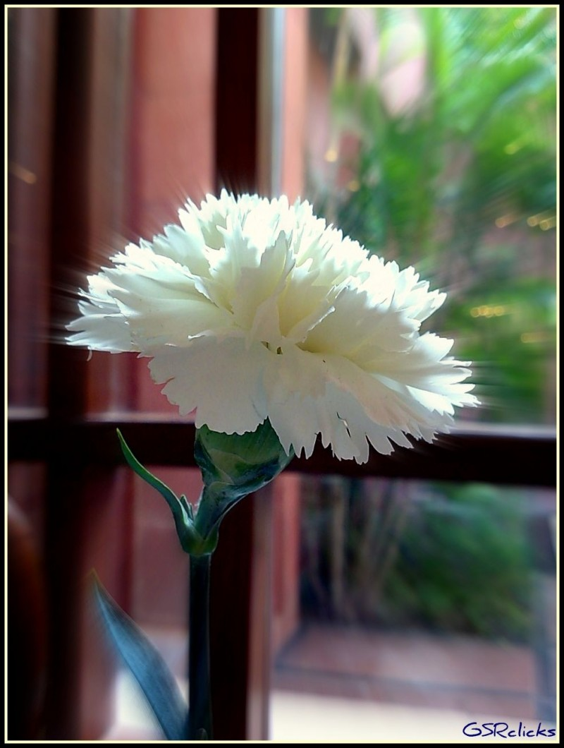 Blooming glory