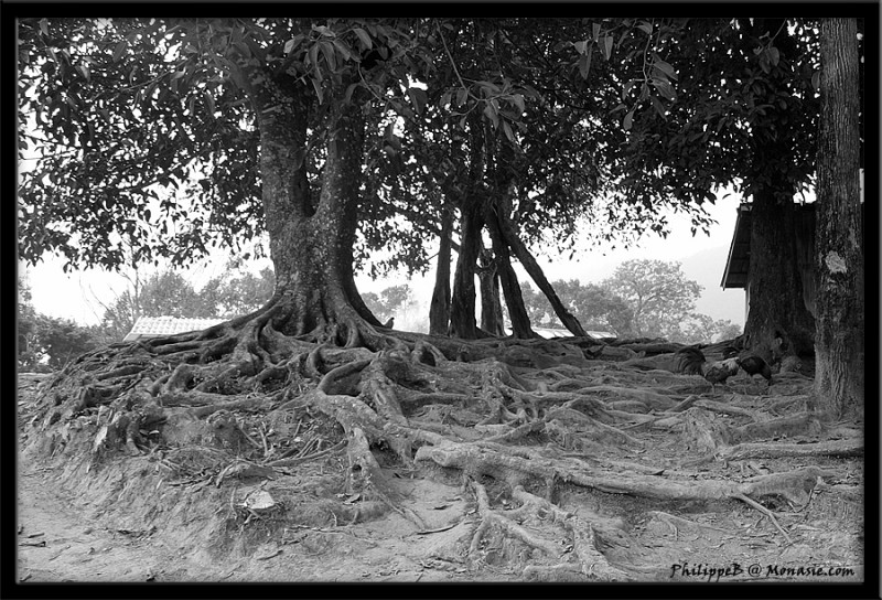 (6/6)Hmong In Doi Suthep (Chiang Mai, Thailand)