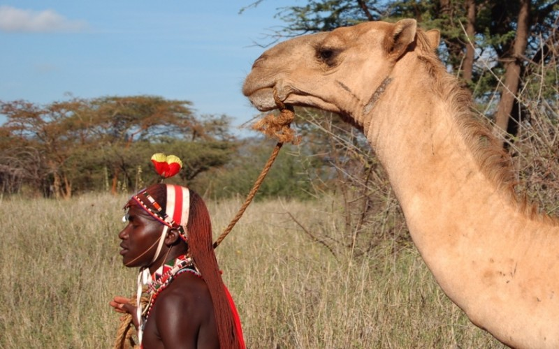 Maasai moran with his camel