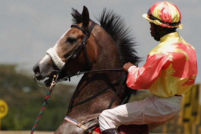 Horse and jockey prepare for Race #3, Nairobi