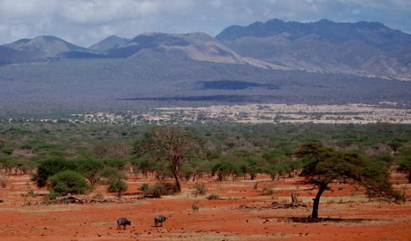 Wildlife in Tsavo National Park