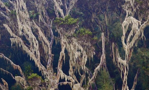 Hanging moss on trees near Karura Waterfall, Kenya