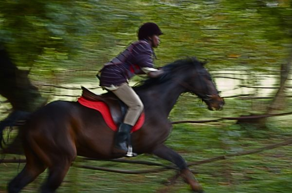 Horse and rider on cross-country course