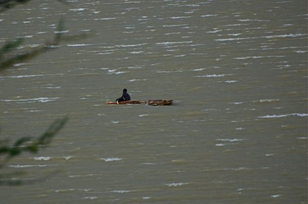Lake Baringo fisherman paddles for shore