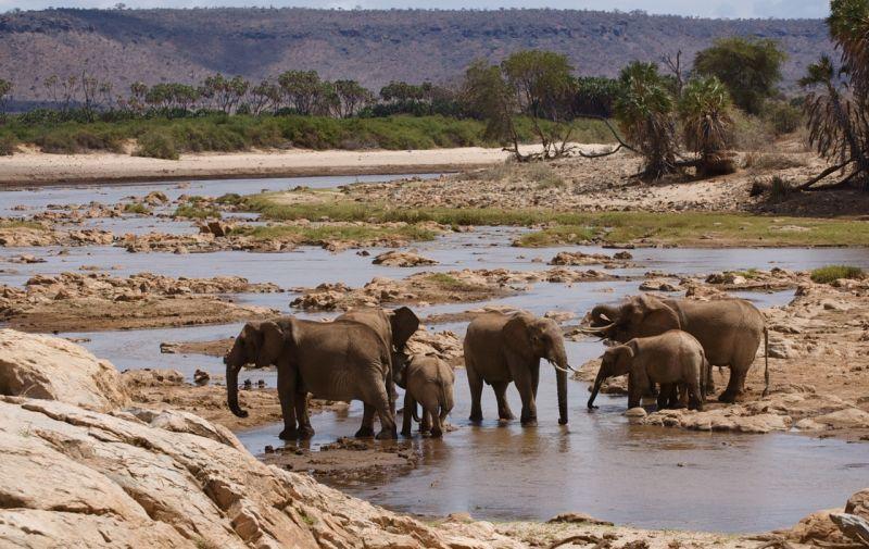 Elephants in Galana River, Tsavo