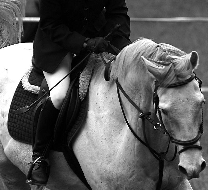 horse show equestrian