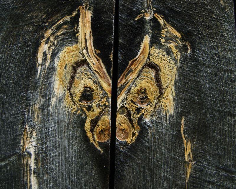 Wood grain in an old barn, Heath, Massachusetts
