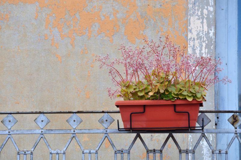 Flowerbox, Valencia