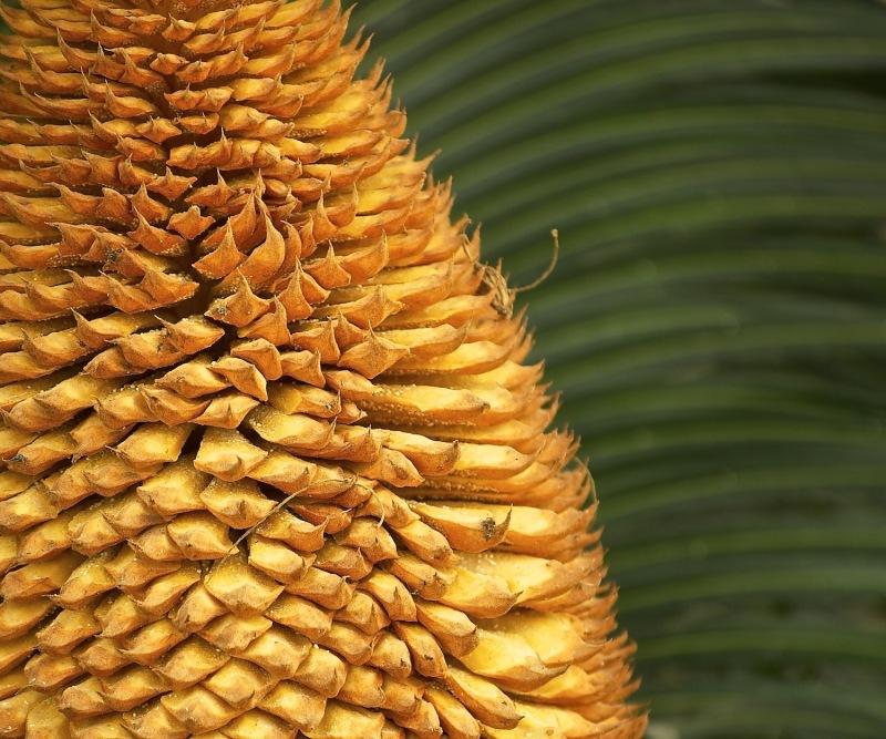 Palm Flower