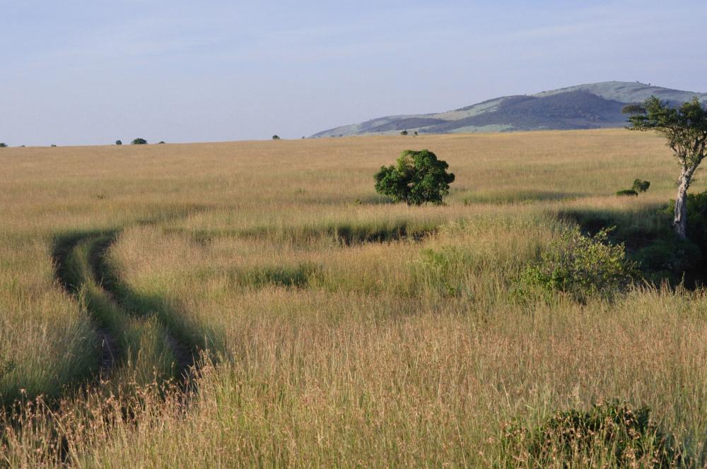 Safari landscape, Masai Mara, Kenya
