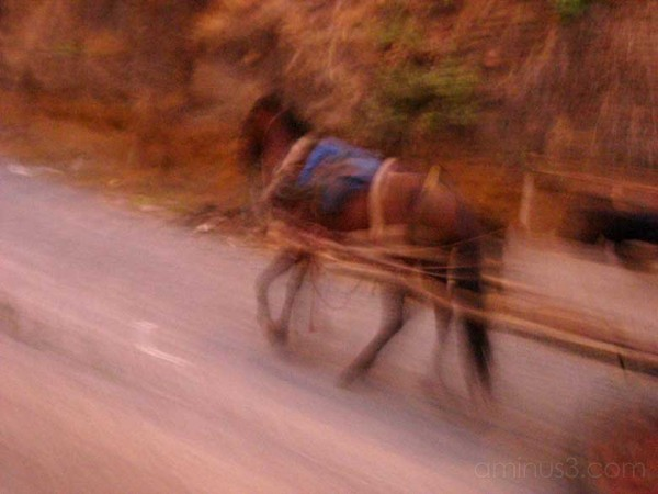 Horse, road to Carazo, Nicaragua