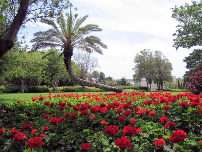 Palms Garden