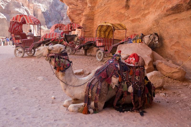 Camels & carriages near Al-Khazneh - Petra, Jordan