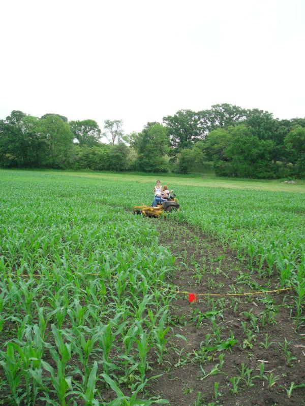 Creating the Corn Maze