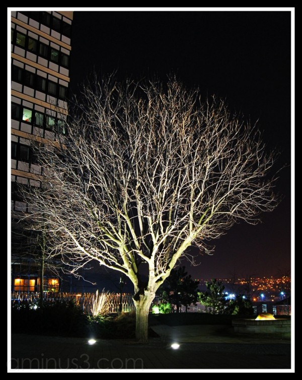 Lit up tree outside Sheffield Hallam Union.
