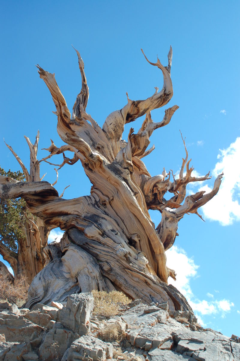 Amazing Tree...