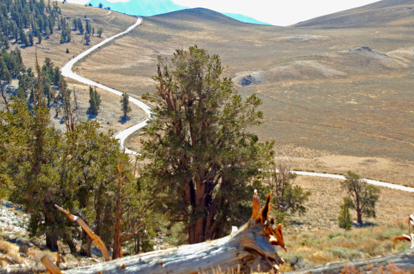 Road to Bristlecone Pine Forest...
