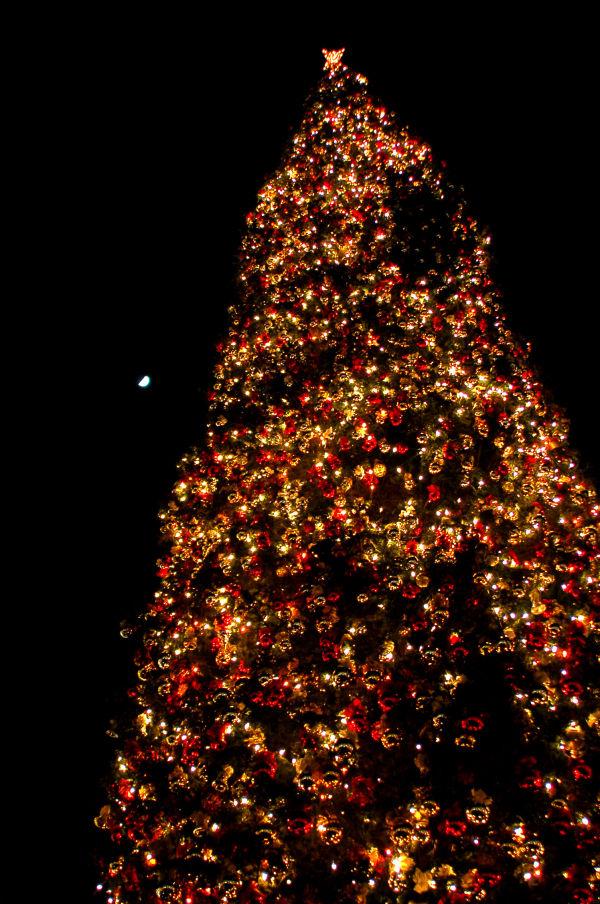 Christmas Tree & The Moon