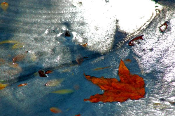 Water & Leaf