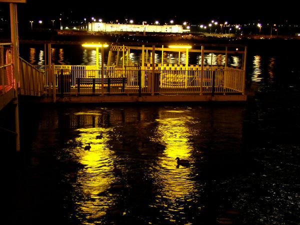 Ducks at the Dock