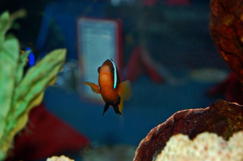 Cool Fish!