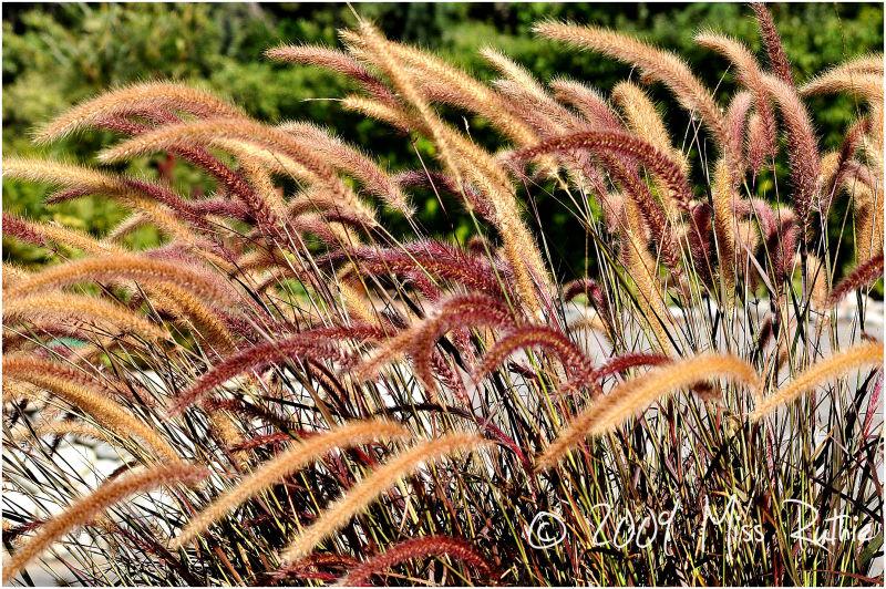 Grains.
