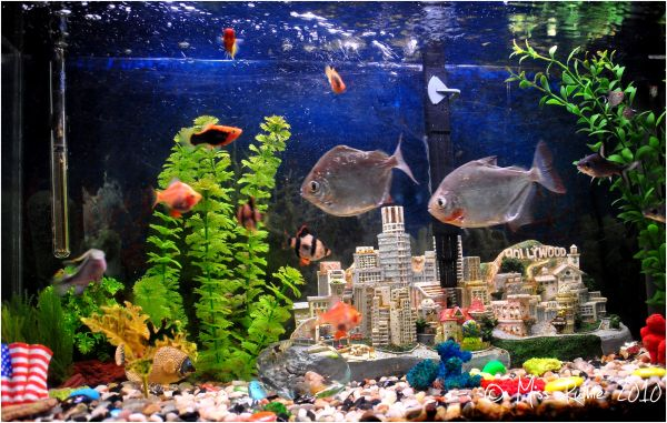 Ruthie's Fish Tank