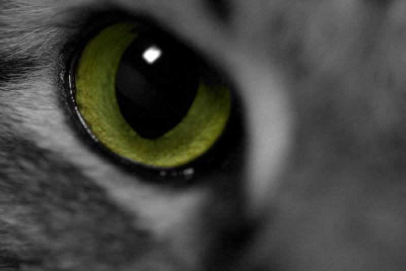 Cat eye closeup