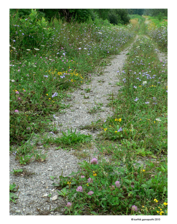 Friendship trail