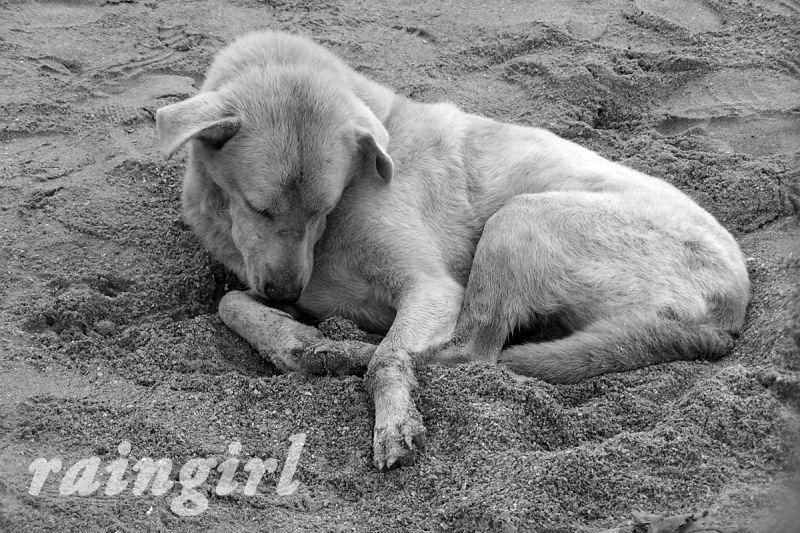 sun, sand and me...