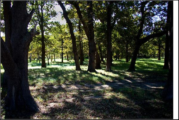Through the woodland