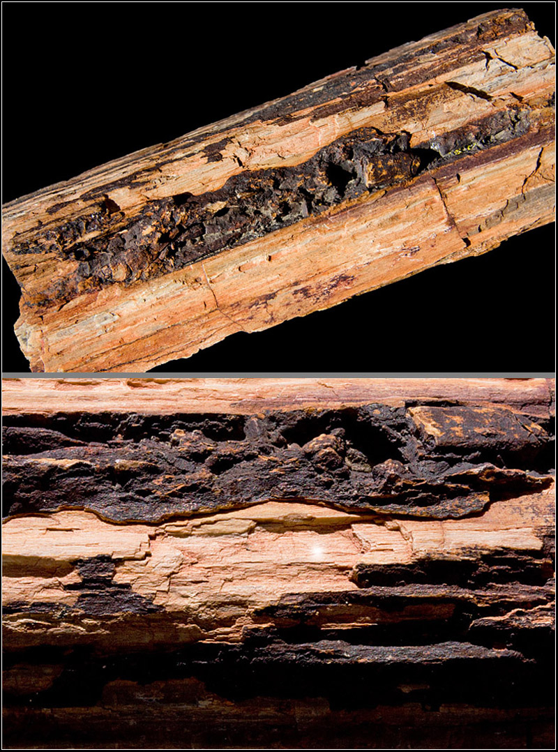 Nature's textures ii - Petrified wood