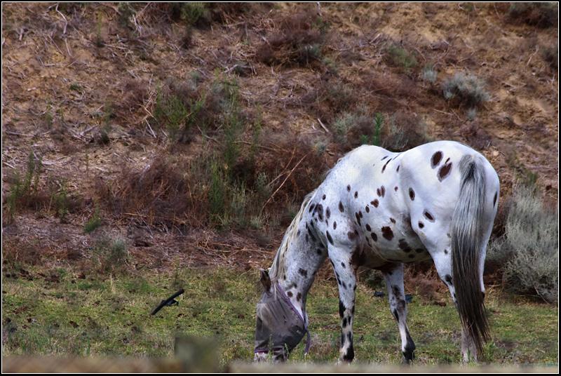 102nd Dalmatian?