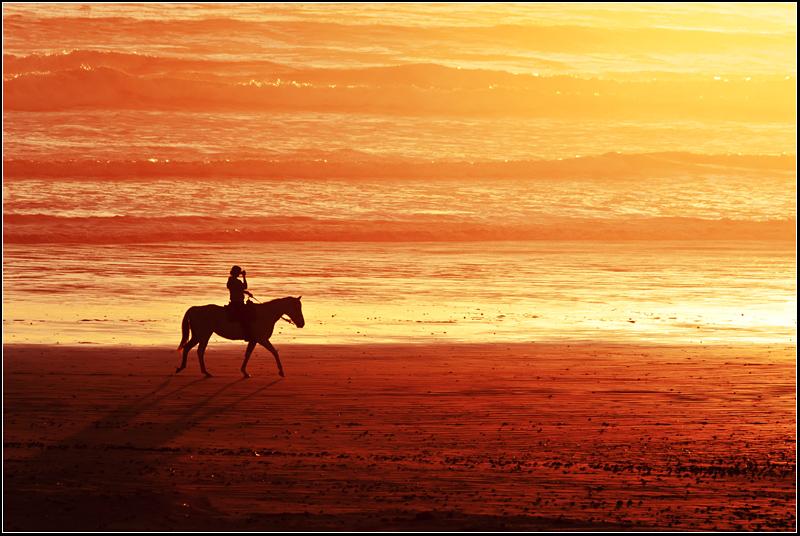Melkbosstrand sunset horse