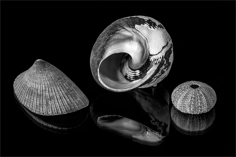Shells reflections