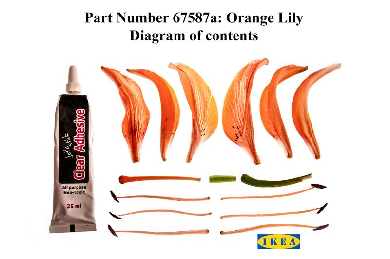 Ikea lily