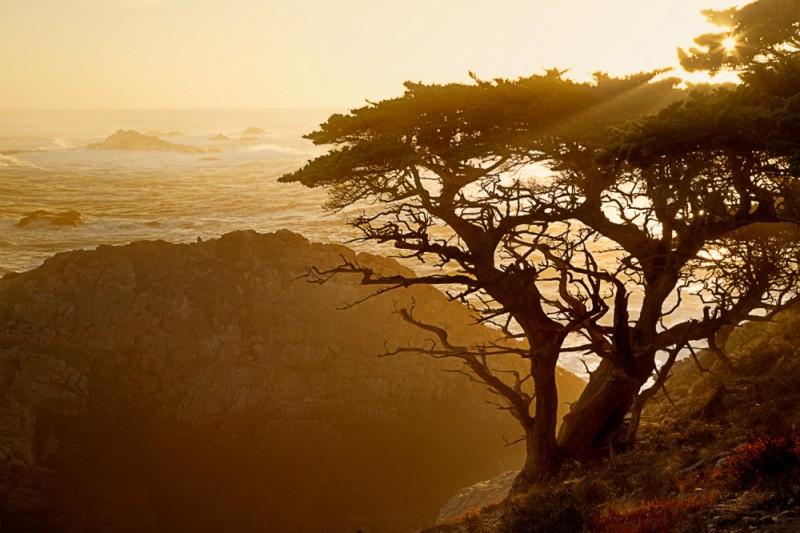 Cypress Tree at Point Lobos California