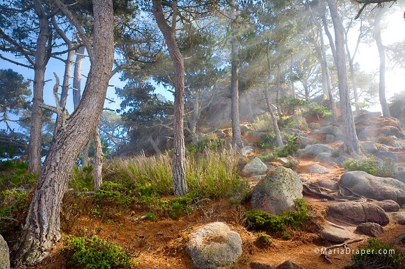 North Point Trail, Point Lobos State Reserve, CA