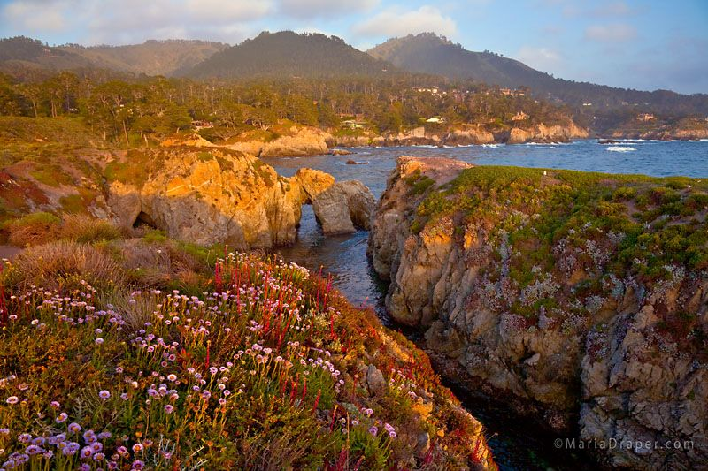 Pelican Point, Point Lobos, Carmel, California