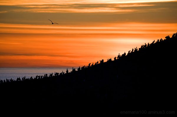Bird Island, Point Lobos State Reserve, Carmel, Ca