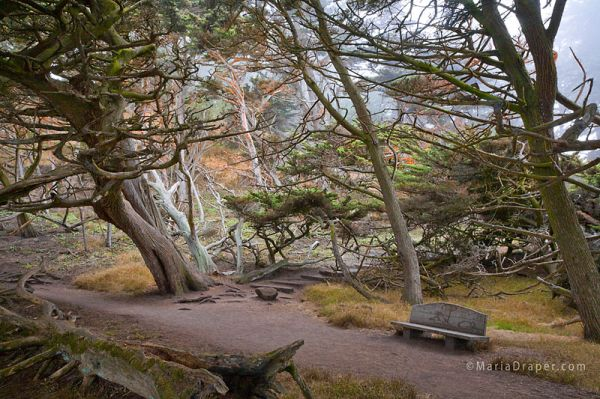 Cypress Grove, Point Lobos