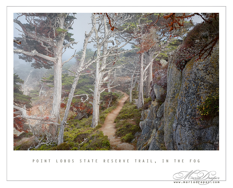 Point Lobos State Reserve Trail, California