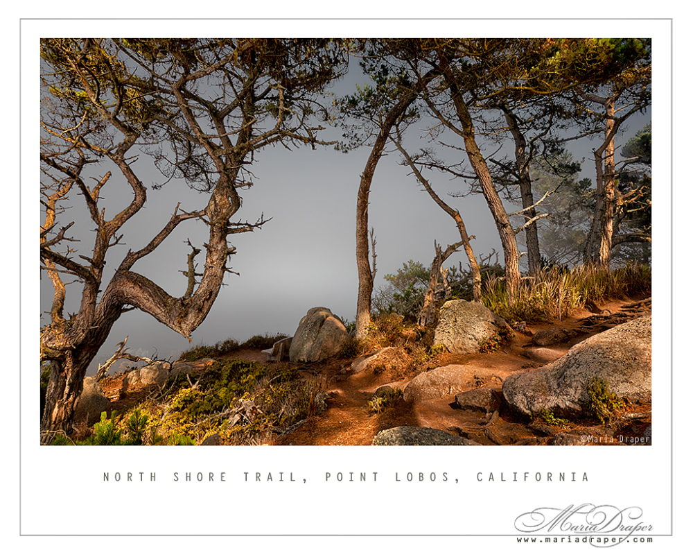 North Shore Trail, Point Lobos State Reserve, CA