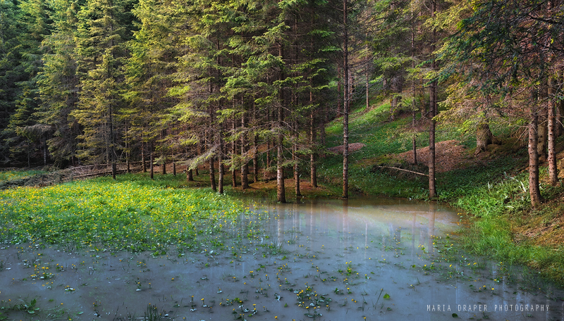 Forest Pond, Ghedina, Italy