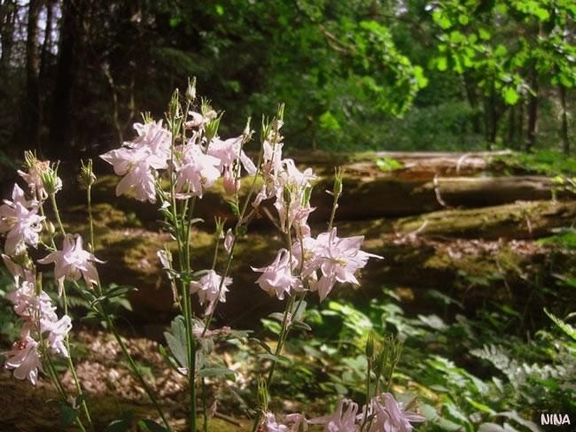 wood glade